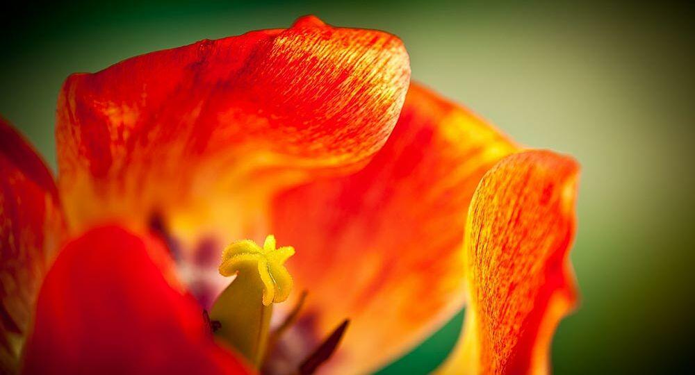 generic-flower-photo